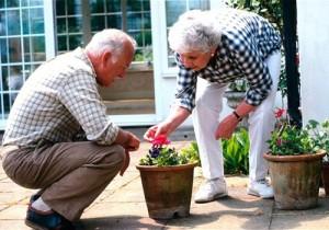 Neil Adams Elder Gardening